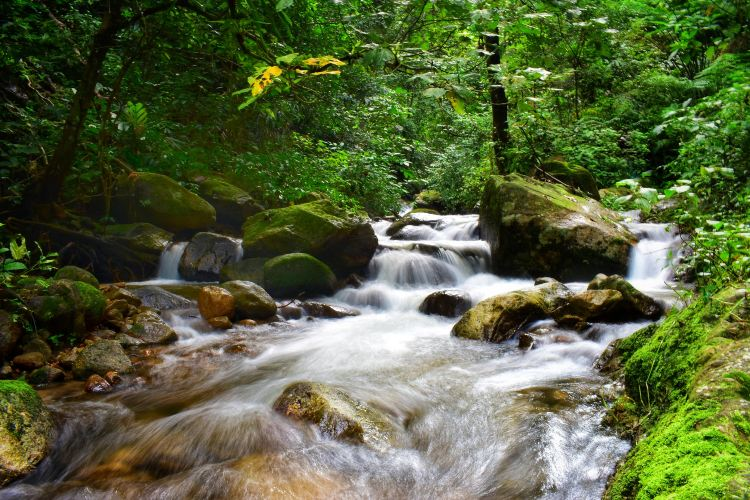 Taiping National Forest Park3