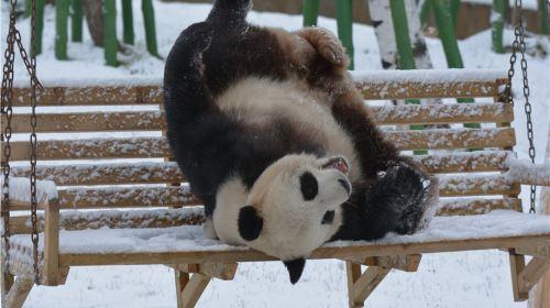 亞布力熊貓館