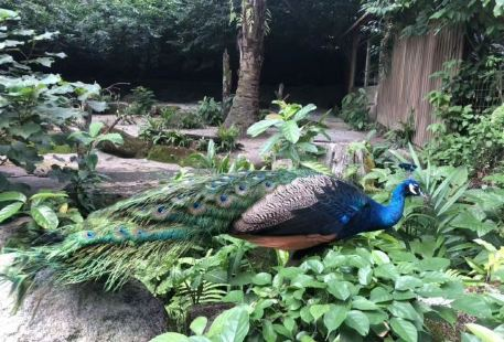 Linyiyesheng Zoo