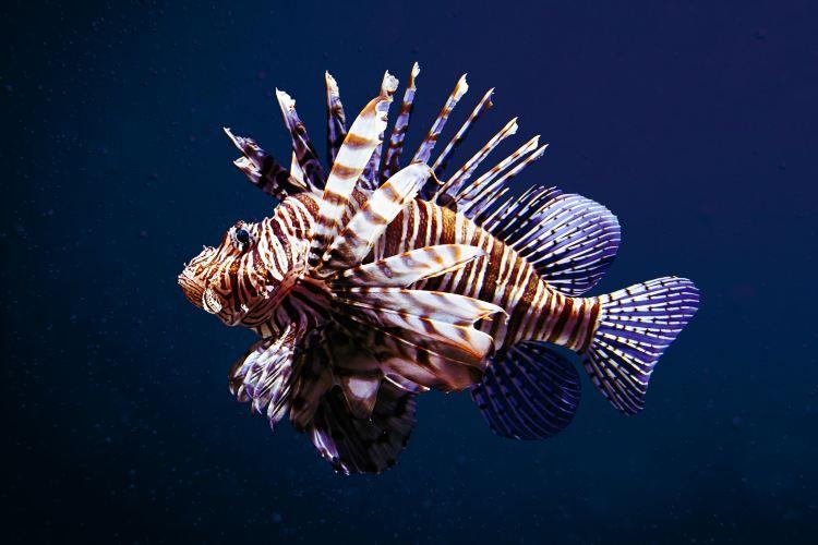 Georgia Aquarium3