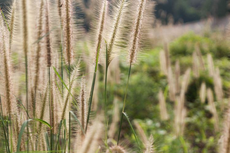 漢江濕地公園1