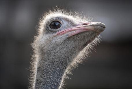 Chuandong Ecology Zoo