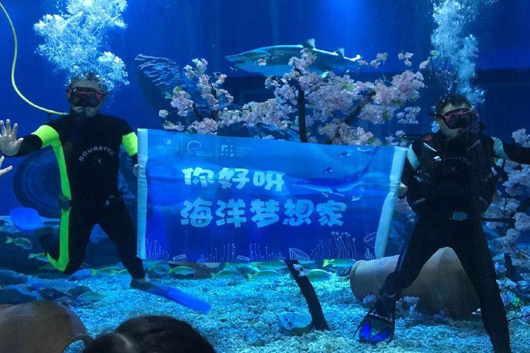 Wuhan Haichang Polar Ocean World3