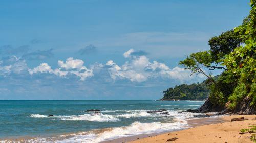 코코넛 섬