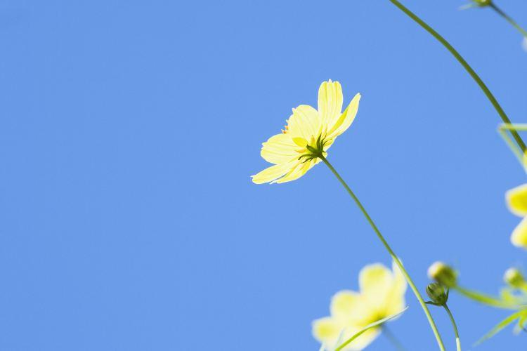 Pengcheng Thousand-flower Valley2