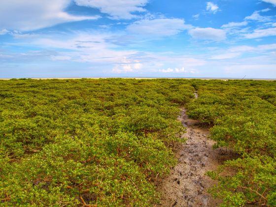 산커우 맹그로브숲