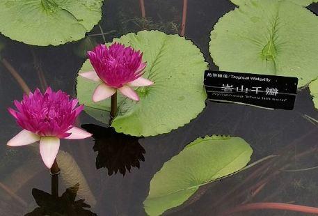 Zhangjiajie Lotus Garden