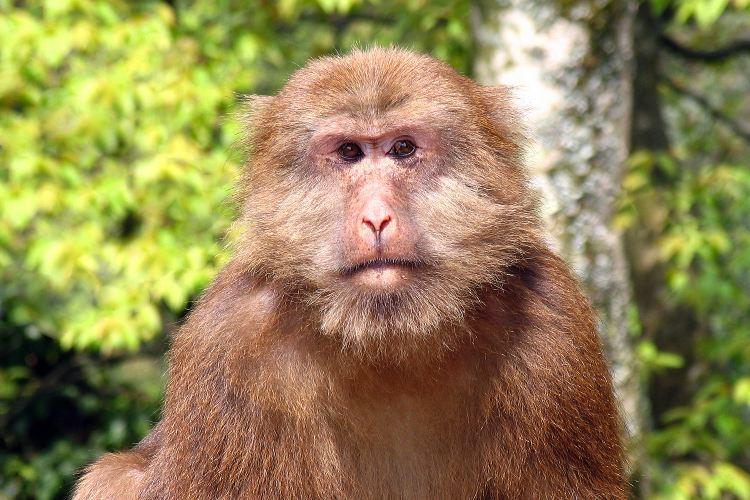Mt. Emei Natural Ecology Monkey Reserve3