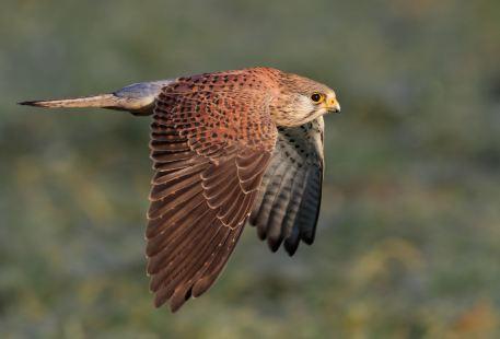 董寨鳥類自然保護區