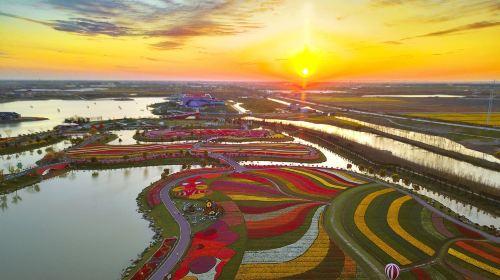 Dutch Flower Sea