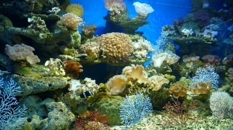 Beihai Ocean Garden