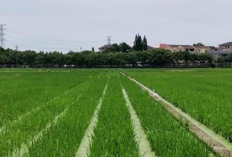 浙江省農科院楊渡基地