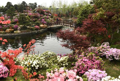 Paragon Garden