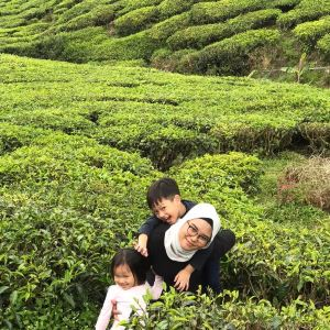Cameron Highlands,Recommendations
