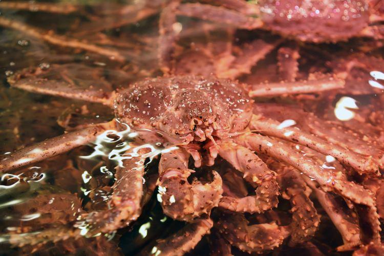 Sapporo Crab Market1