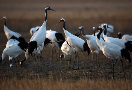 Yancheng Protected Areas for Red-crowned Cranes