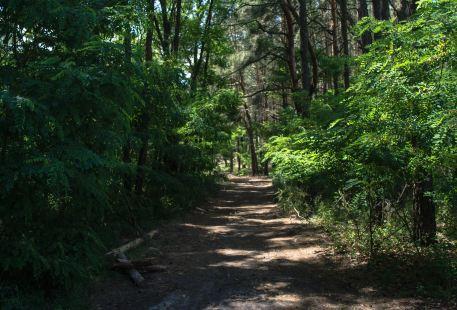 Botani Eco Park