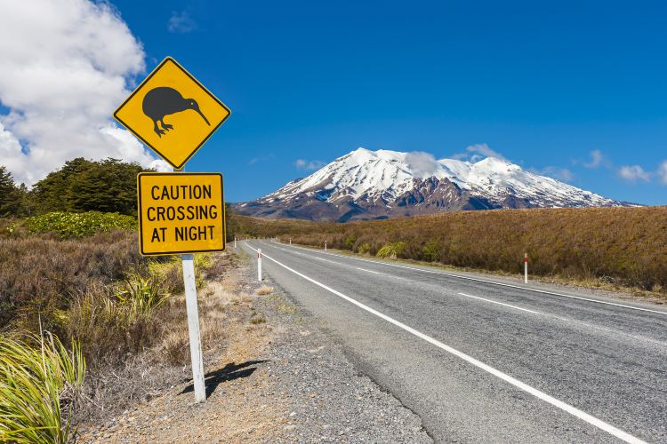 Tongariro National Park4