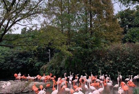 Zhuzhouchangsha Zoo