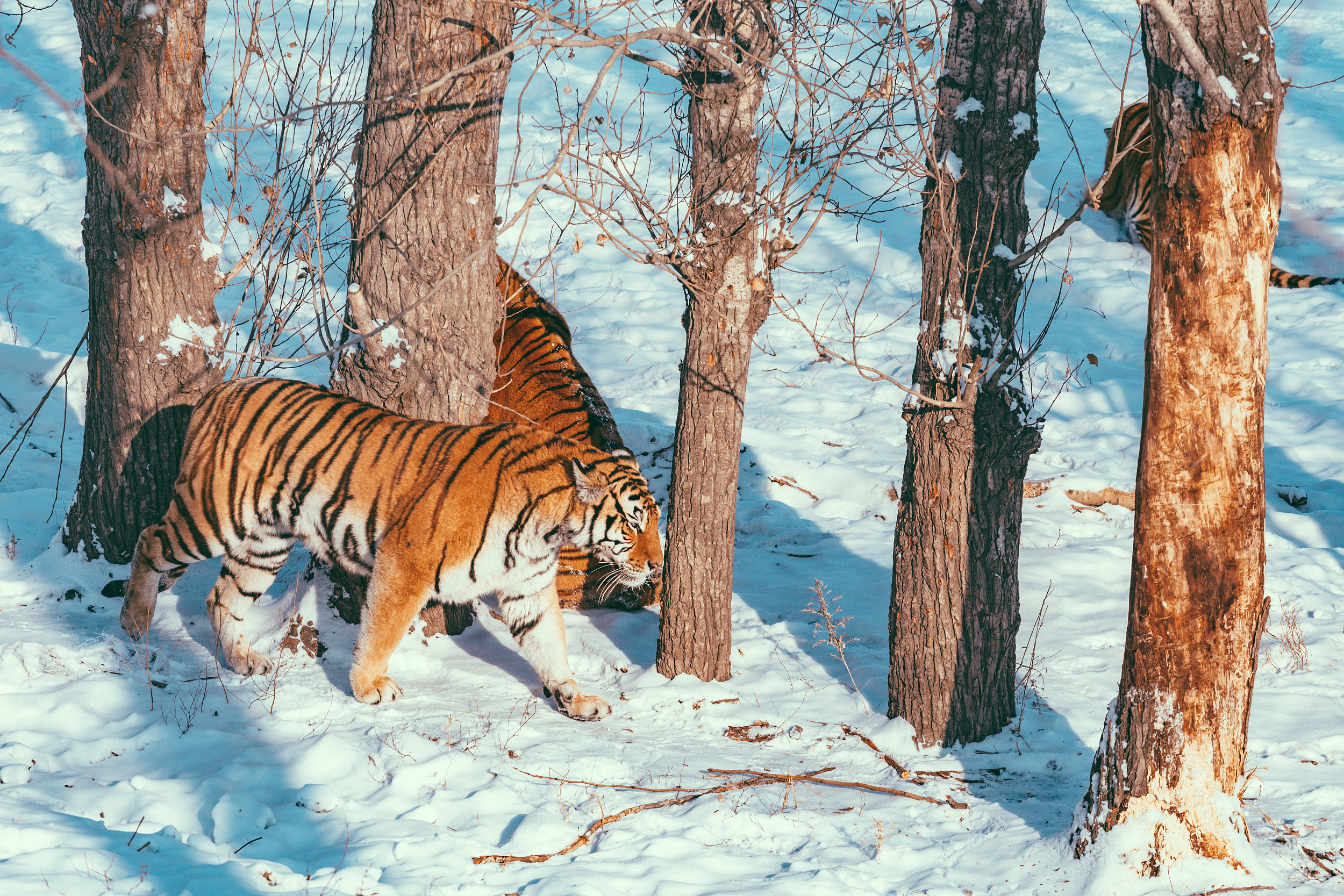 Northeast Tiger Forest Park