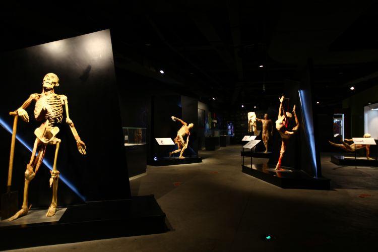 生命の神秘博物館3