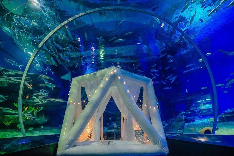 Wuhan Haichang Polar Ocean World1