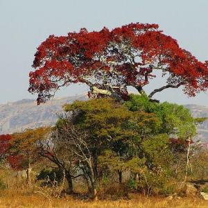 Zambia,Recommendations