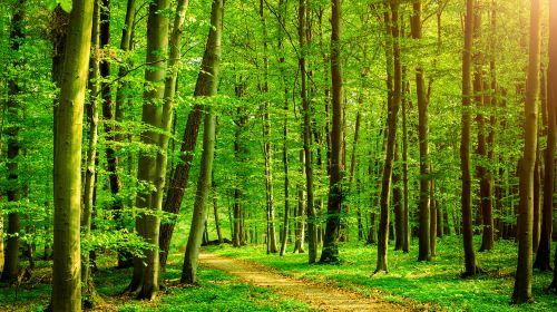 Huanghai Forest Park