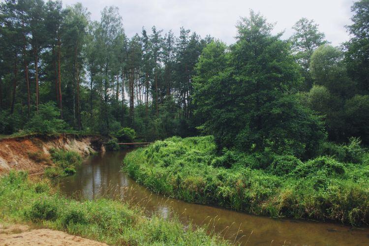 小東溝原始森林