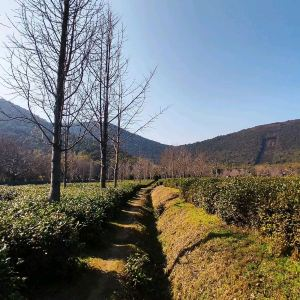 Wangshan Scenic Area,Recommendations