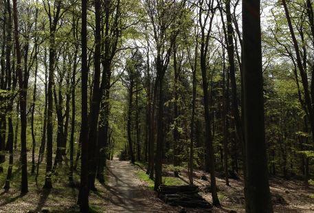 太原森林公園