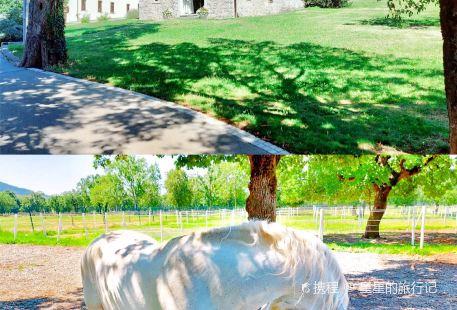 Lipica Stud Farm - Kobilarna Lipica