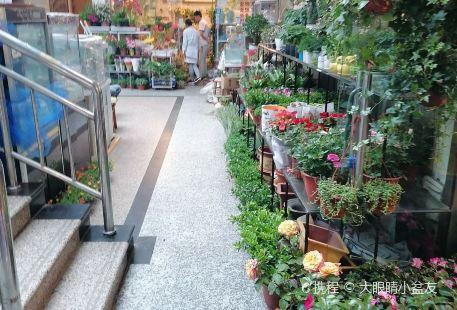 Yangpu Park bird and flower Market