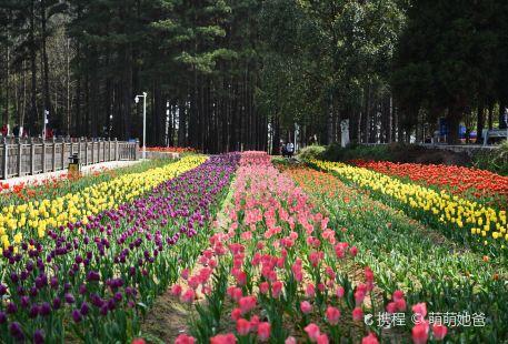 龍架山森林公園