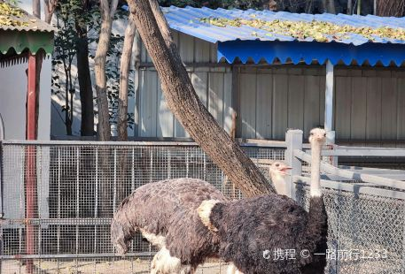 Xuzhou Zoo