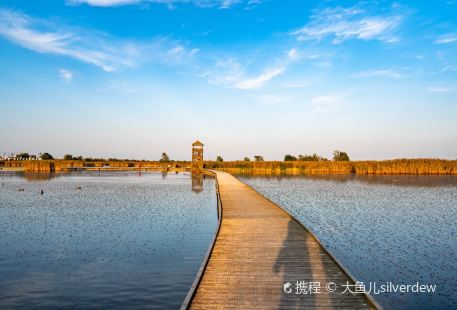 Yancheng Red-Crowned Crane Nature Reserve