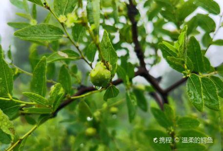 Xiang Shan Gongyuan Huaibei Zoo