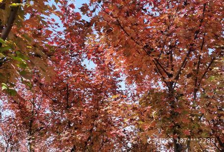Hongsen Botanical Garden