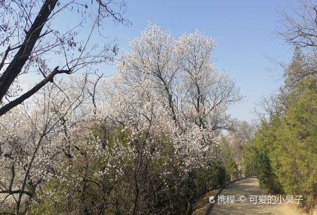 Yan'an Forest Park