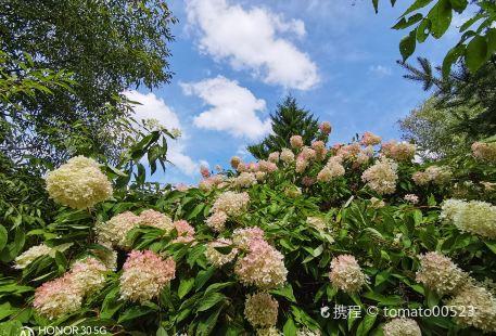 Jilin Jiangcheng Forest Botanical Garden