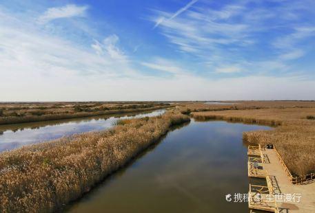 Yellow River Estuaries