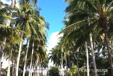 Coconut Grand View Garden
