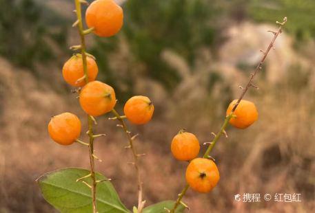 市農科院花都基地(廣州農科大觀)