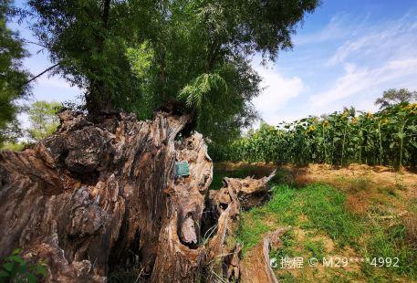 Shenshu Jian