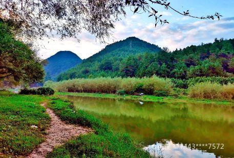 野梅嶺森林公園