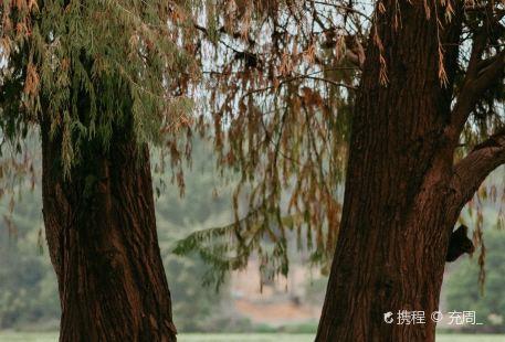 良鳳江生態蝴蝶園