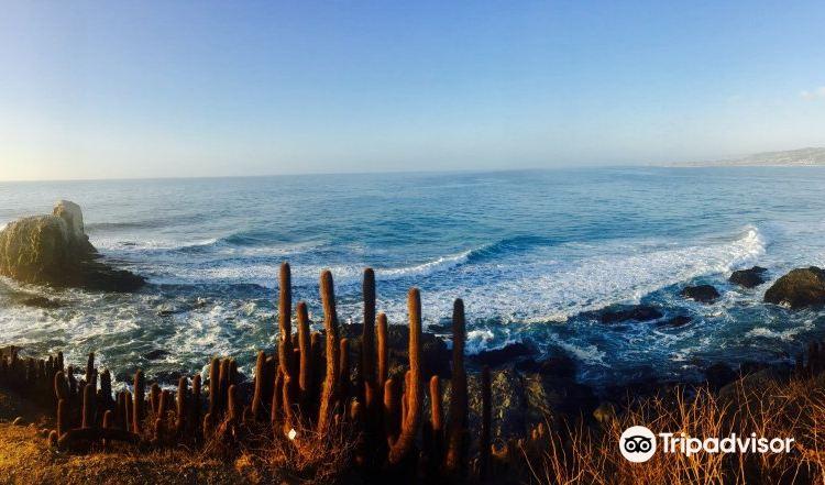 Punta De Lobos1
