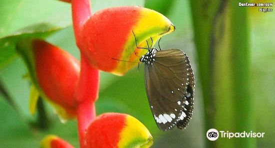 Jumalon Butterfly Sanctuary4