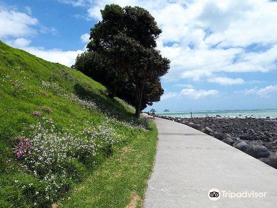New Plymouth Coastal Walkway1