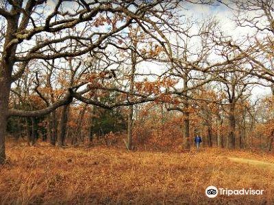 Keystone Ancient Forest